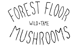 Forest Floor Mushrooms